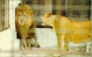 LIONNE & LION
